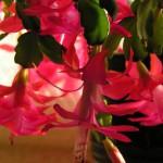 Декабрист, живой подарок, визитки для цветов, комнатные растения в подарок, подарить оригинальный подарок