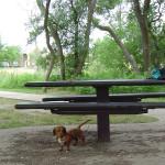 мое любимое домашнее животное собака, домашние питомцы собаки