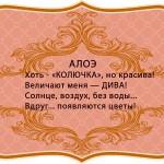 визитки цветов, комнатные растения в подарок, алоэ