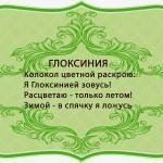 живой подарок, визитки для цветов, комнатные растения в подарок, подарить оригинальный подарок