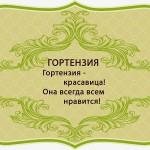 визитки цветов, комнатные растения в подарок, Гортензия