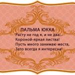 визитки цветов, комнатные растения в подарок, Пальма Юкка