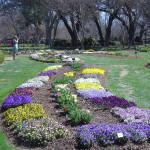 Дендрарий, г. Даллас, Весна