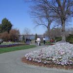 Дендрарий, г. Даллас, Цветной сад