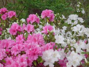 Весна, Дендропарк Ботанический Сад, штат Техас США