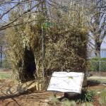 необычные гнезда птиц, лучшее гнездо для птиц