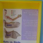 домики для разных птиц, весна в техасе, птицы в техасе