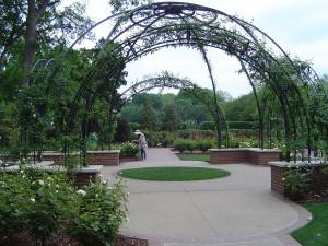 плетистые розы арка, смотреть розы в саду, цветы сад розы, сад из роз