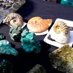 окаменелые раковины, малахит поделочный камень, натуральный камень малахит, зеленый малахит камень, сувениры минералы, поделочные камни урала, камни урала фото, природные камни урала, самоцветы урала камни, камни урала екатеринбург, малахитовая шкатулка фестиваль, малахитовая шкатулка екатеринбург