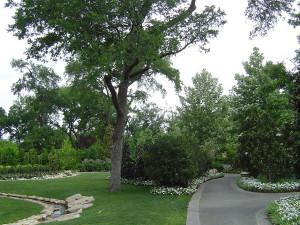 магнолия растение фото, цветущее дерево магнолии, магнолия крупноцветковая, магнолия куст, как выглядит магнолия, южная магнолия, магнолия magnolia, магнолия цветущая фото, магнолия кустарник, магнолия сад, дерево магнолия фото, магнолия картинки, растение магнолия, флора магнолия, дендропарк фото