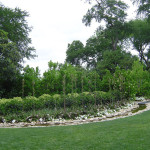магнолия растение фото, магнолия крупноцветковая, южная магнолия, магнолия magnolia, магнолия сад, дерево магнолия фото, растение магнолия, флора магнолия, дендропарк фото