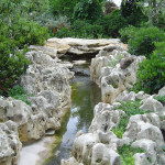 дендропарк пруд, магнолия сад, дендропарк фото
