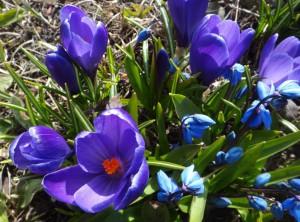 цветы заполярья