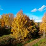 удивительная природа ленинградской области, природа ленинградской области фото, красивая природа ленинградской области, ленинградская область природа