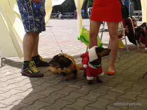 одежда собака фото, картинки одежда собак, картинки про такс, фотки таксы, смотреть фото таксы, смотреть про такс, такса фотографии, фото таксы собаки, одежда такса фото, одежда собака такса, красивая одежда собак, прикольная одежда собак, модная одежда собак, шоу такс, одежда такса, веселая такса, милые таксы, таксы интересное, смешные таксы, такса приколы
