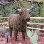 символы техаса, техасский бык, лонгхорн, техасские лонгхорны, лонгхорн порода, цветочные фигуры, цветочные фигуры фото, цветущий парк, штат техас сша, дендропарк фото