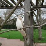 птица пересмешник, символы техаса, цветочные фигуры, цветочные фигуры фото, цветущий парк, штат техас сша