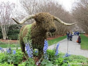 символы техаса, техасский бык, лонгхорн, техасские лонгхорны, лонгхорн порода, цветочные фигуры, цветочные фигуры фото, цветущий парк, повозка запряженная, штат техас сша