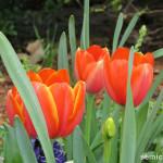 символы техаса, цветочные фигуры, цветущий парк, штат техас сша, дендропарк фото, даллас сша