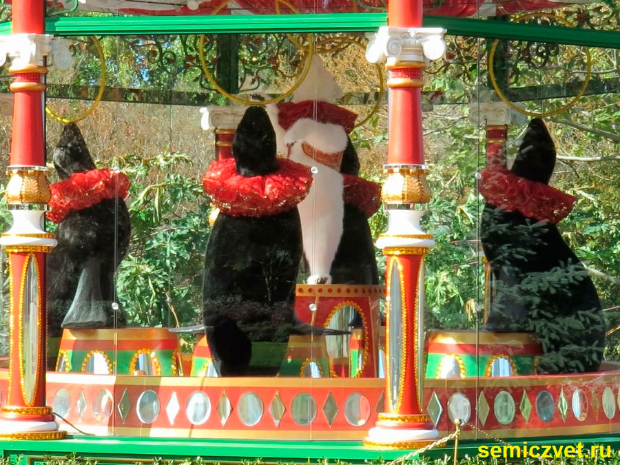 пять золотых колец, двенадцать дней рождества, 12 дней рождества песня, 12 дней рождества крещения, дендропарк фото, праздник рождества фото, даллас техас, штат техас сша, зимние праздники новый год рождество, двенадцать дней рождества