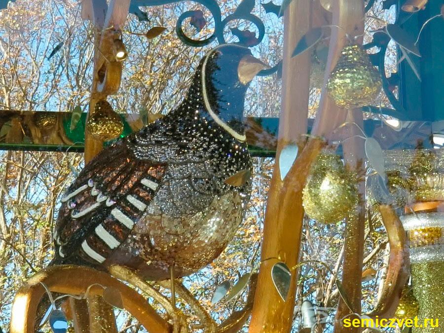 куропатка грушевом дереве, двенадцать дней рождества, 12 дней рождества песня, 12 дней рождества крещения, дендропарк фото, праздник рождества фото, даллас техас, штат техас сша, зимние праздники новый год рождество, двенадцать дней рождества