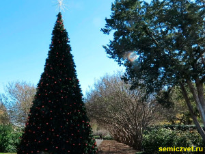 дендропарк фото, праздник рождества фото, даллас техас, штат техас сша, зимние праздники новый год рождество, двенадцать дней рождества