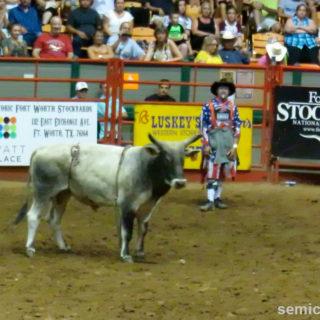 Дикий бык на арене. Каутаун Колизей, Форт-Уорт, Техас