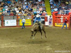 Объездка дикой лошади. Стокъярдс Родео. Каутаун Колизей, Форт-Уорт, Техас