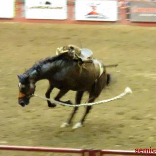Дикая лошадь. Каутаун Колизей, Форт-Уорт, Техас