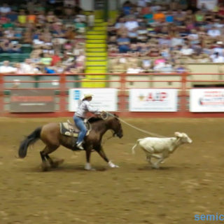 Ловля бычка лассо. Стокъярдс Родео. Каутаун Колизей, Форт-Уорт, Техас