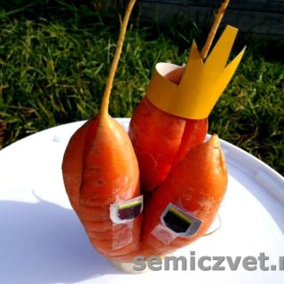 Урожай моркови. Необычные корнеплоды моркови