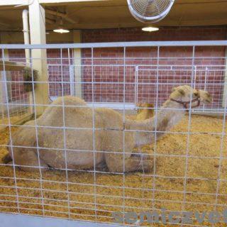 Зоопарк. Ярмарка штата Техас. Фэйр Парк, Даллас