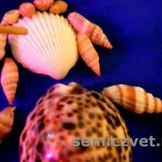 Выбор морской ракушки для поделки