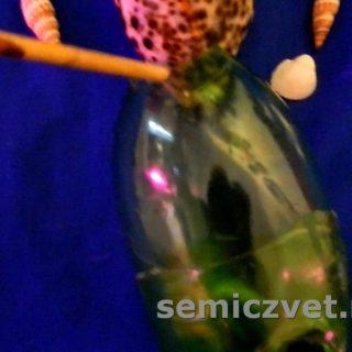 Делаем поделки из морских ракушек