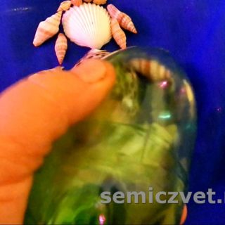 Делаем поделку из морских ракушек