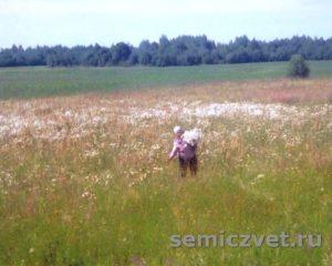 Галина Мачульская. Сбор цветов полевых для флористики